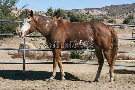 horse standing around