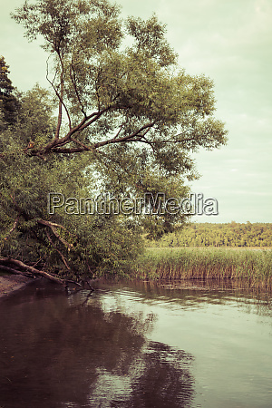 tree over lake shore