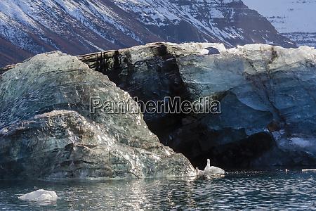 greenland scoresby sund gasefjord dirty iceberg