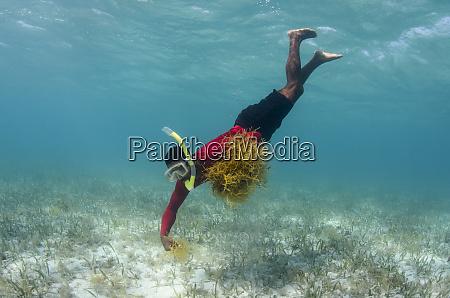 edible algae lighthouse reef atoll belize