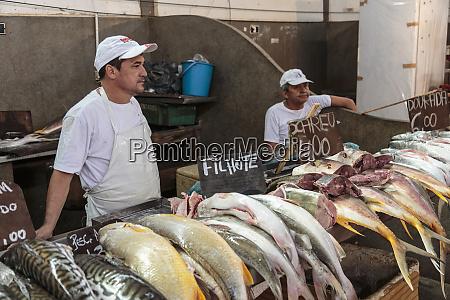 south america brazil belem fishmongers at
