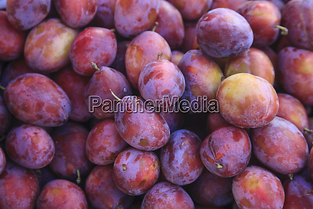 display of red plums in the