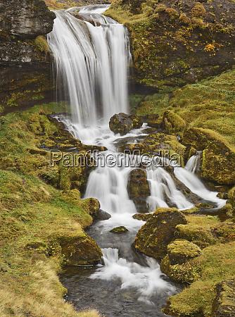iceland sheeps waterfall