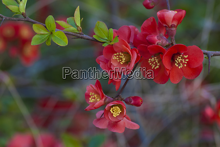 red flowers on a branch