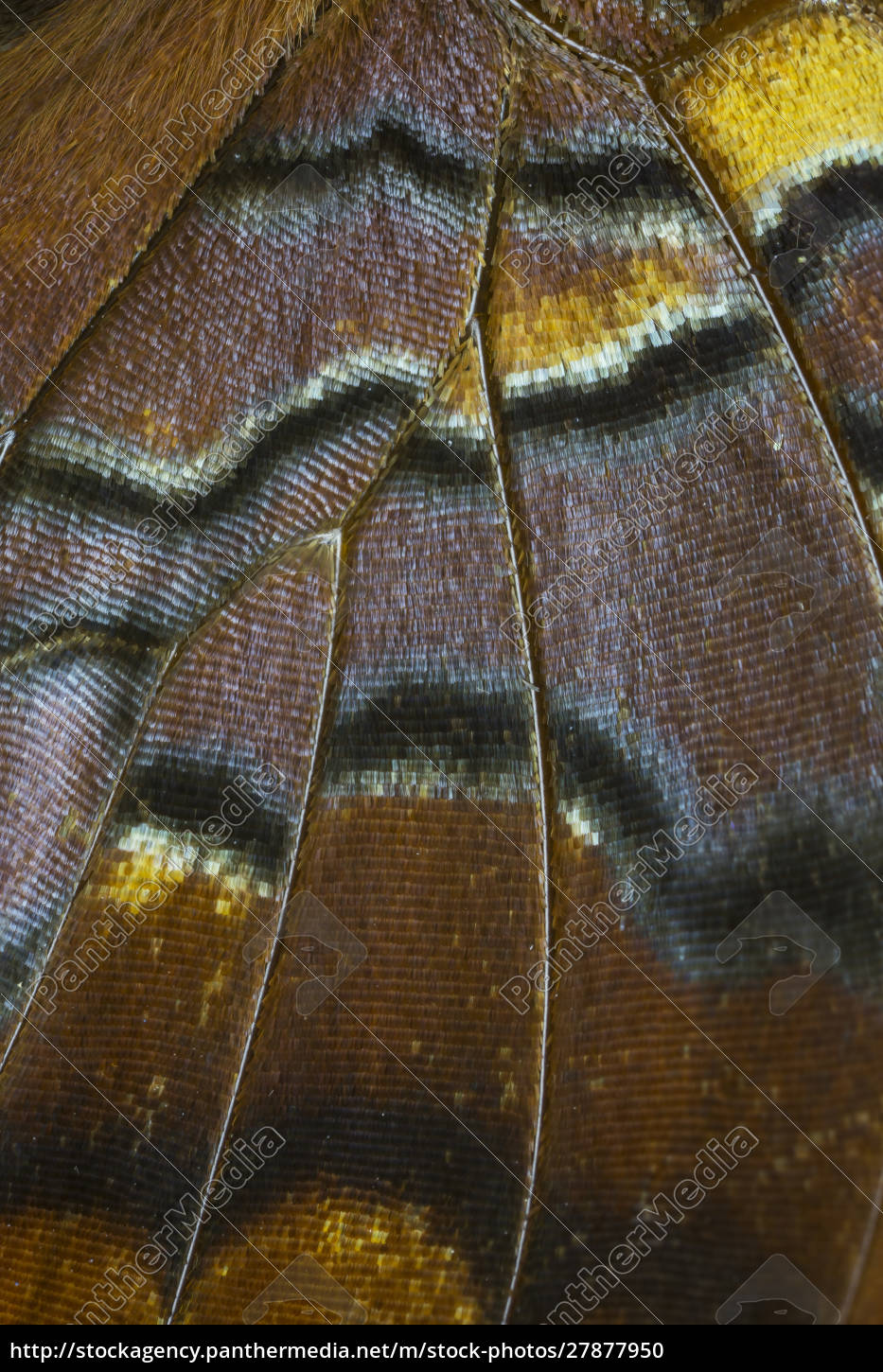 close-up, detail, wing, pattern, of, tropical - 27877950