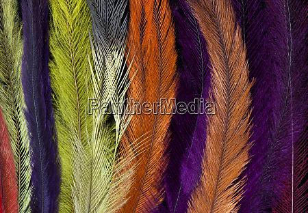 colored rhea feathers