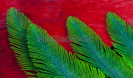 breast and wing feather design of