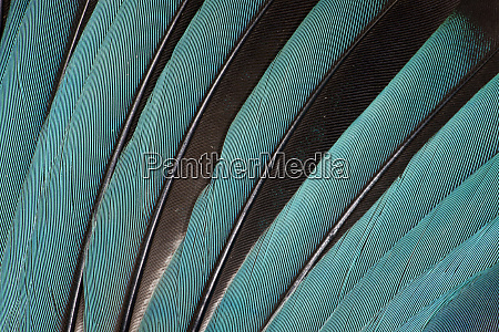 wing feathers in blue fanned out
