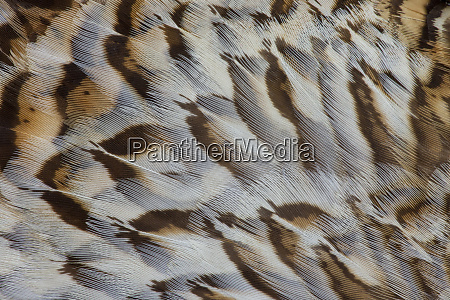 breast feather design and pattern