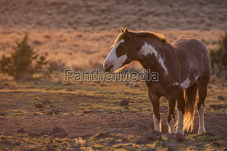 wild horse at mineral lick