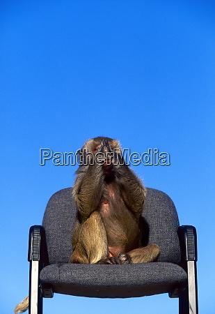 see no evil monkey