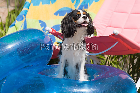 cavaliers at a pool party mr