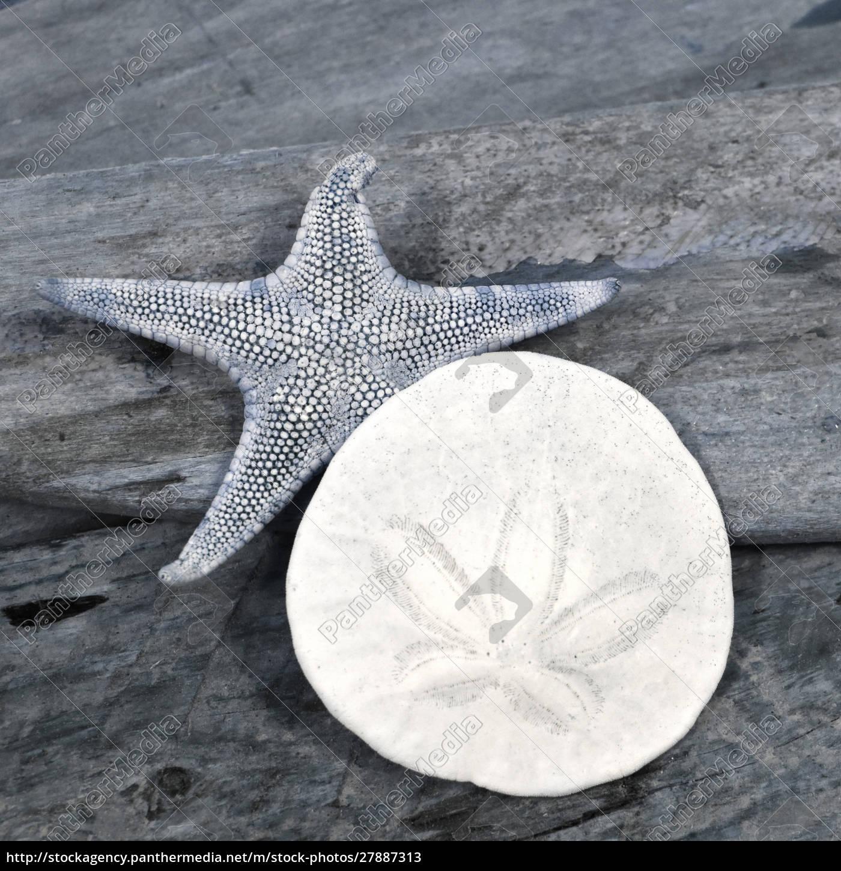 natutical, shell, still, life. - 27887313