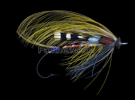 atlantic salmon fly designs juno