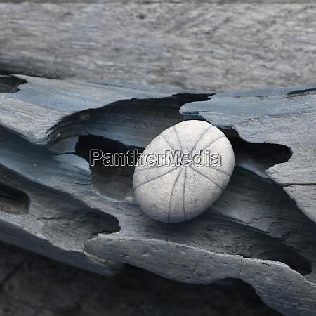 natutical shell still life
