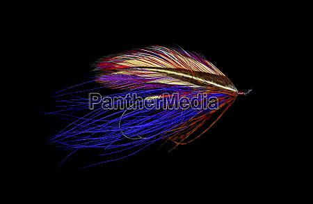 atlantic, salmon, fly, designs, 'iris, spey' - 27888101