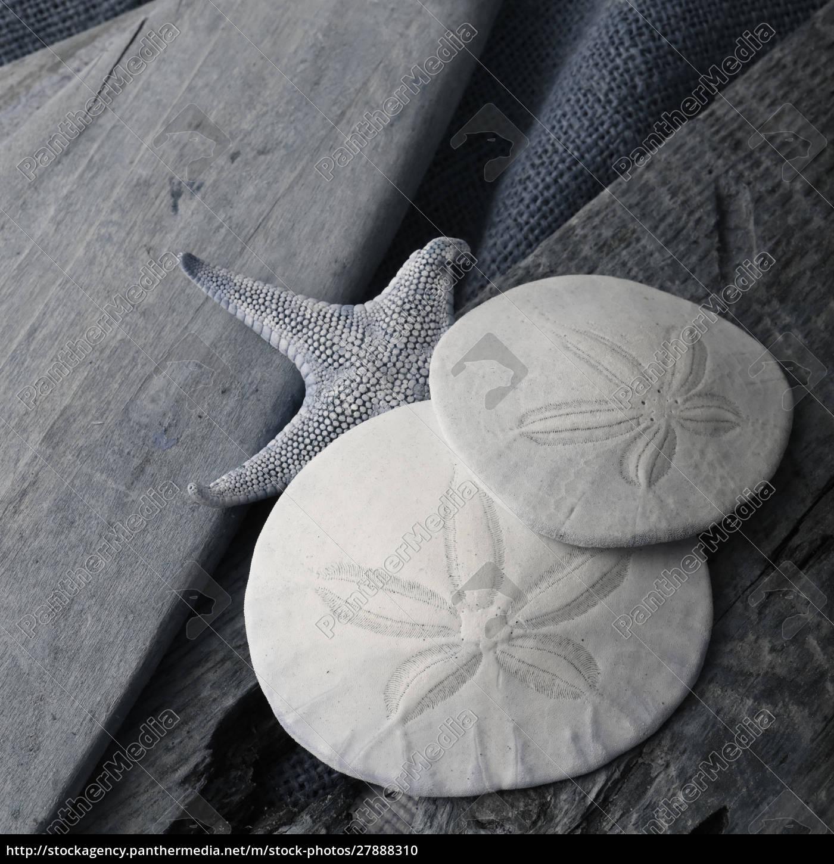 natutical, shell, still, life. - 27888310