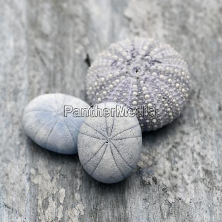 natutical, shell, still, life. - 27888326