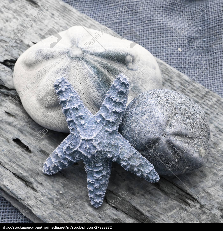 natutical, shell, still, life. - 27888332