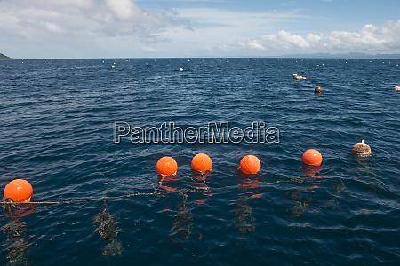 fiji black pearl farming savusavu island