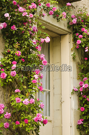 doorway and roses villandry france