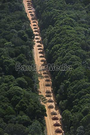 dirt road through rainforest guyana