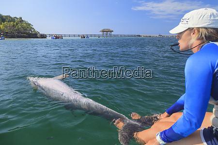 trainer with bottlenose dolphin tursiops truncatus