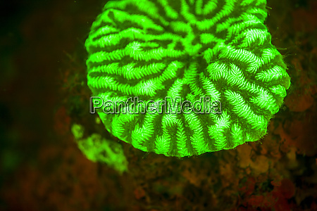 fluorescence emitted in corals captured using