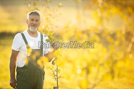 senior gardener gardening in his permaculture