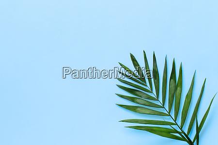 palm leaf on a light blue