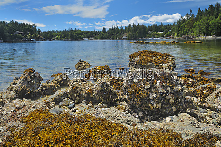 canada british columbia oyster bed in