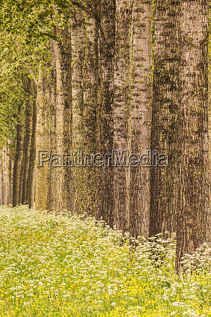 row of trees and flowers netherlands