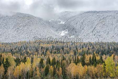 british columbia canada mixed tree forest