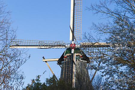 windmill thru tree branches holland