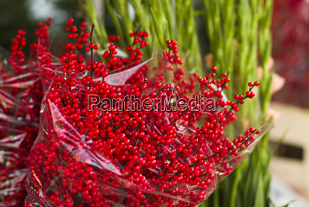 netherlands amsterdam holly berries for sale