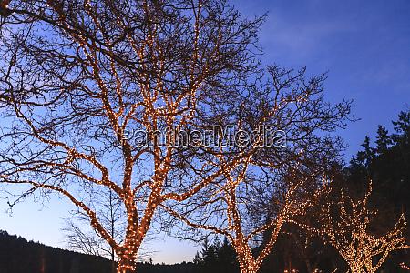 christmas lighting butchart gardens british columbia