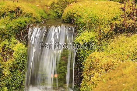 japanese garden butchart gardens saanich peninsula