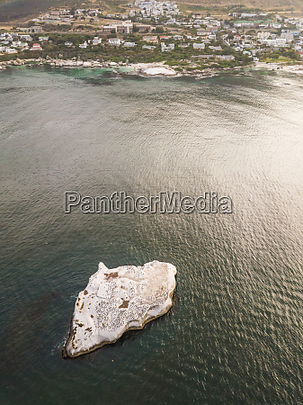 aerial view of group of penguins