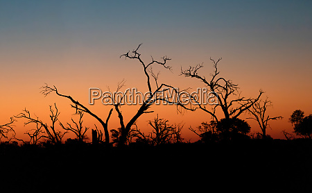 sunset in africa okavango delta botswana