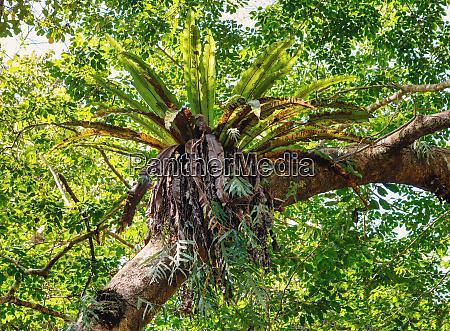rainforest in masoala national park madagascar