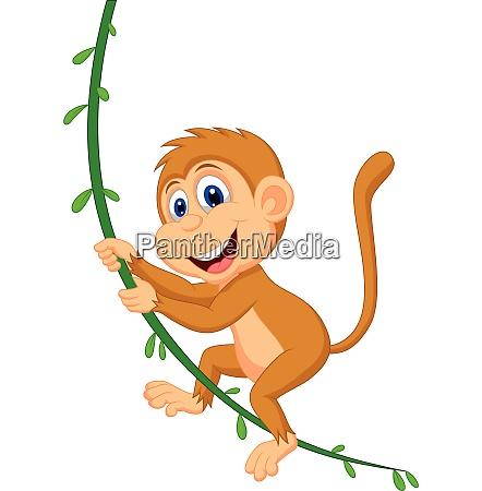 cute monkey swinging