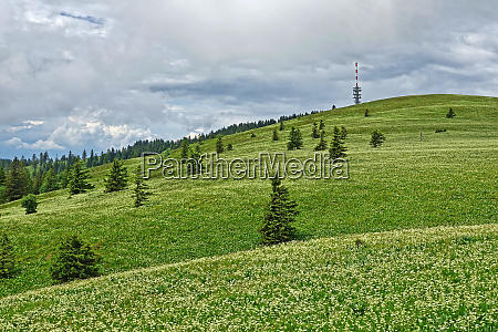 view over meadows with bear root