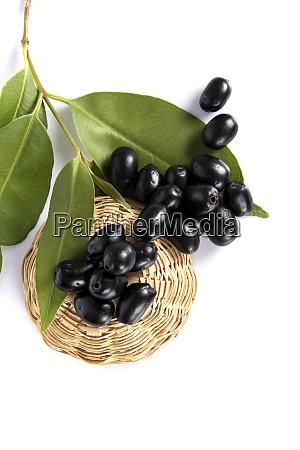 jambolan plum or java plum syzygium