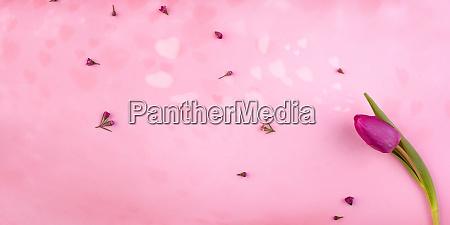 romantic pink hearts with purple tulip