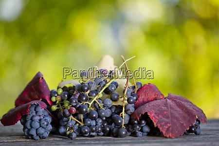 grape outdoor