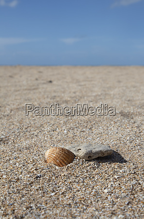 empty beach with shell and pebble