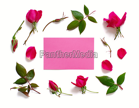 flowers and leaves with pink paper