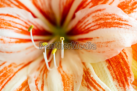 beautiful beautiful colorful flowers in