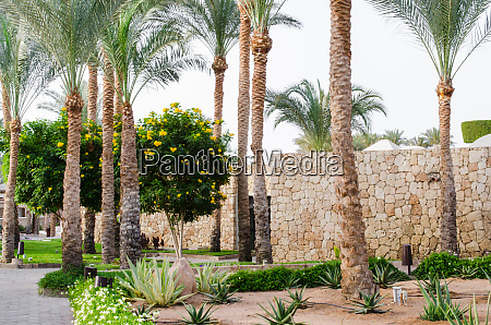 well groomed park area with palm
