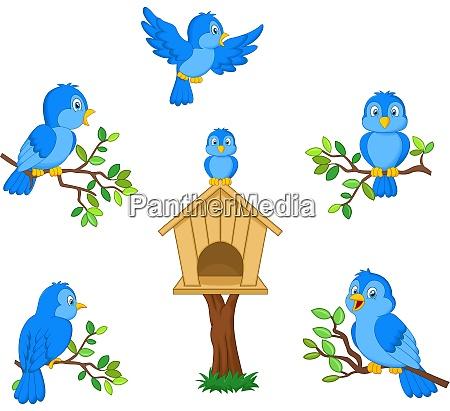 set of cartoon blue bird on